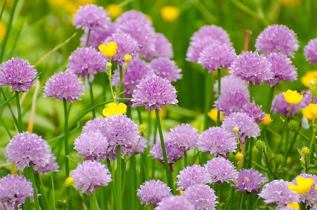 Flower Summer Spring - Free photo on Pixabay (223534)