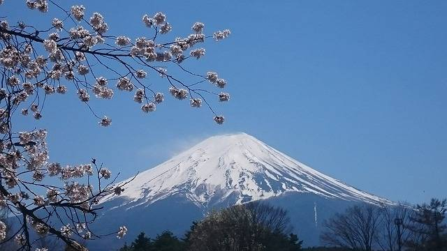 Mt Fuji Spring Cherry Blossoms - Free photo on Pixabay (225234)