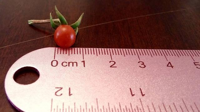 Tomato Tiny Ruler - Free photo on Pixabay (229347)