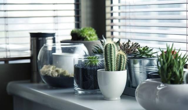Pots Plants Cactus - Free photo on Pixabay (231635)