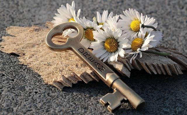 Key Heart Daisy - Free photo on Pixabay (241882)