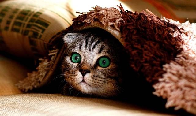 Cat Blanket Hide - Free photo on Pixabay (244716)
