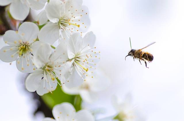 Flower Bee Macro - Free photo on Pixabay (246556)