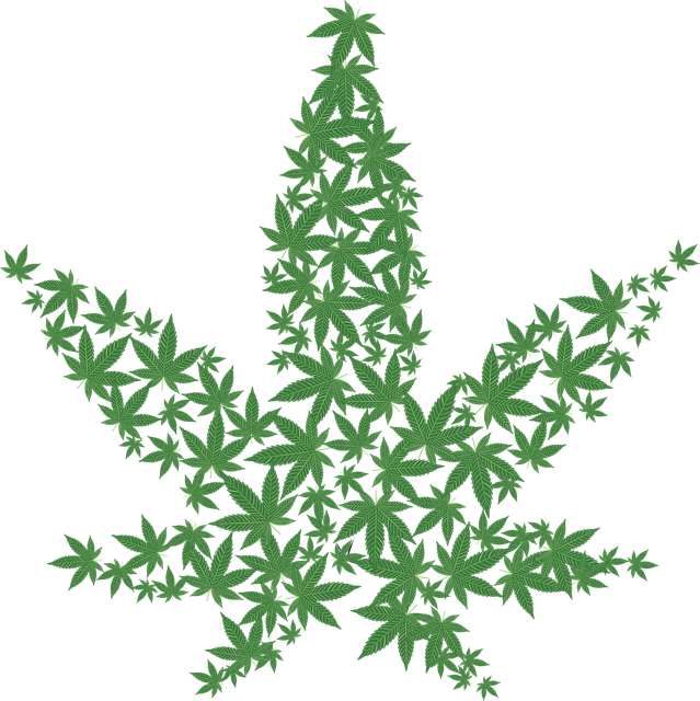 Cannabis Drug Forbidden - Free vector graphic on Pixabay (253711)