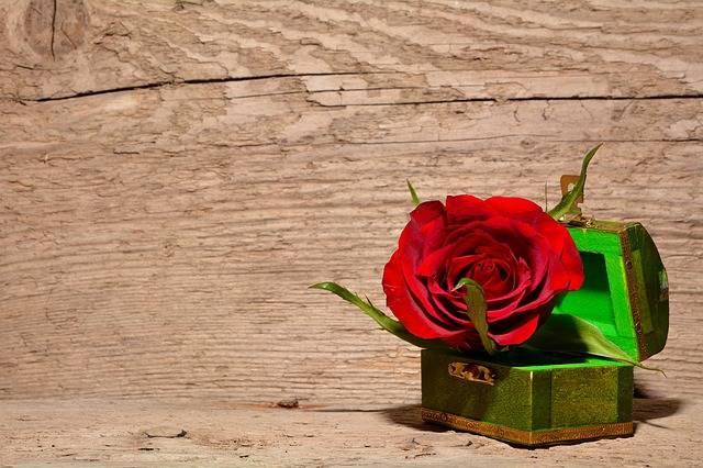 Rose Red Flower - Free photo on Pixabay (266399)