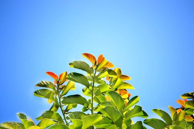 Leaves Blue Sky Summer Bright - Free photo on Pixabay (270249)