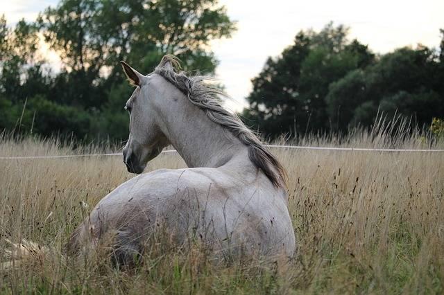 Horse Mold Thoroughbred Arabian - Free photo on Pixabay (271895)