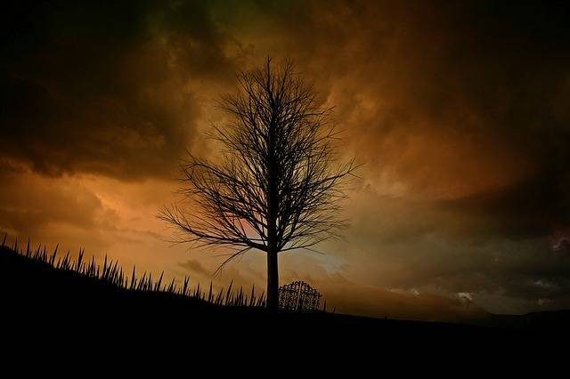 Tree Landscape Lonely - Free photo on Pixabay (274288)
