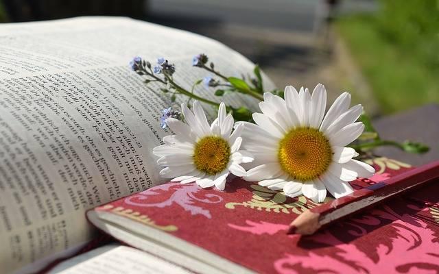 Daisies Book Read Writing - Free photo on Pixabay (276323)