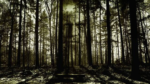 Horror Face Forest - Free image on Pixabay (276929)