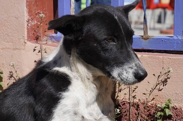 Dog Animalia Mammals - Free photo on Pixabay (278559)