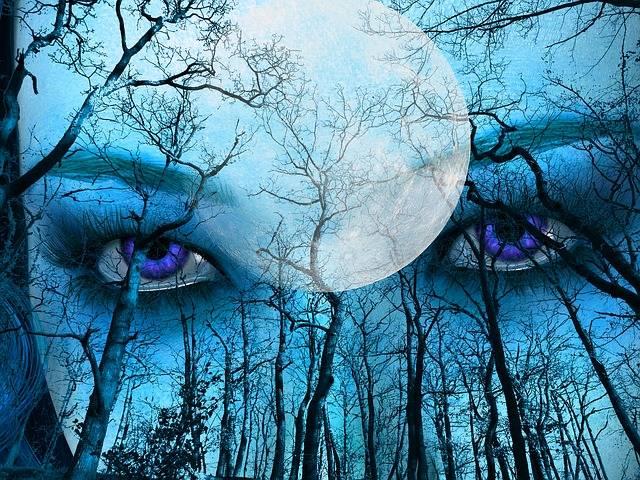 Blue Forest Sky - Free image on Pixabay (281875)