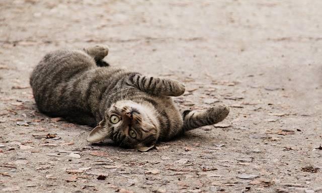 Cat Spoiled - Free photo on Pixabay (282427)