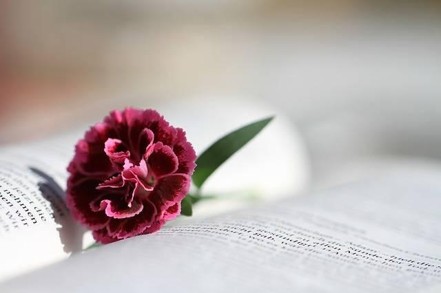 Bible Read Christianity - Free photo on Pixabay (294160)