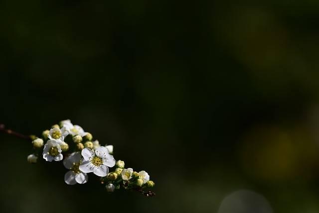 Flowers White Background Text - Free photo on Pixabay (296954)
