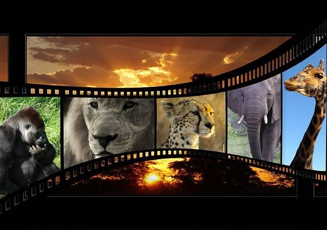 Movie Animal Nature Shots - Free image on Pixabay (298588)