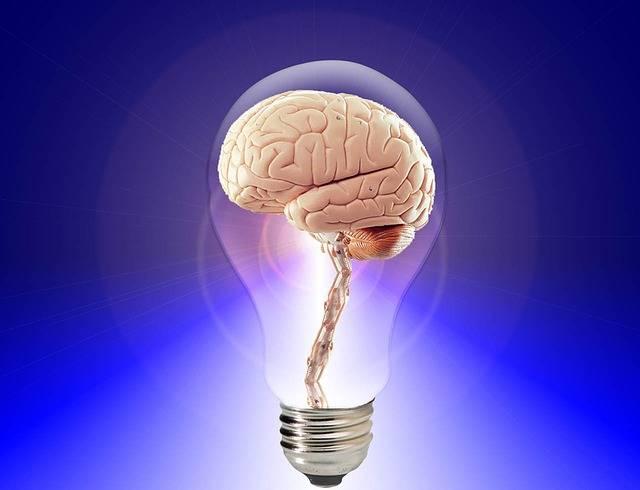 Brain Think Human - Free image on Pixabay (301585)