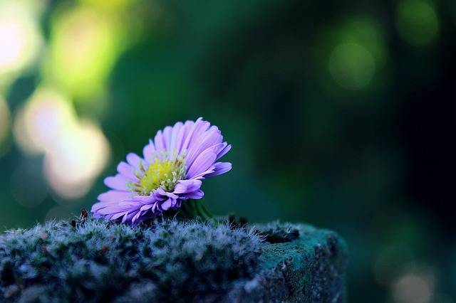 Flower Lonely Alone - Free photo on Pixabay (302338)