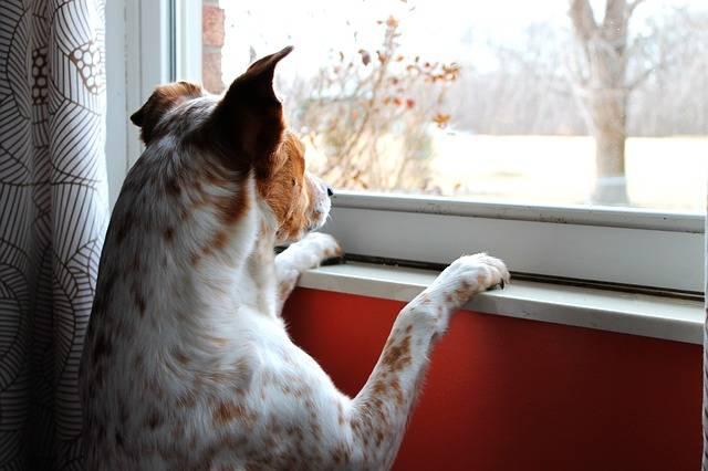 Dog Intent Watching - Free photo on Pixabay (307399)