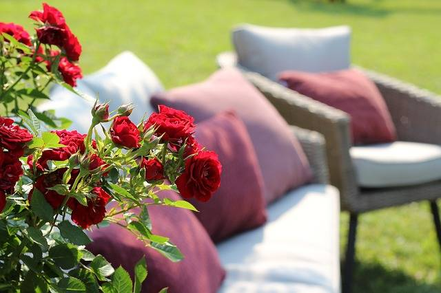 Red Roses Armchairs Relaxation - Free photo on Pixabay (308812)