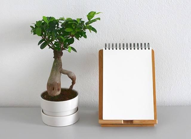 Leaf Plant Growth - Free photo on Pixabay (313717)