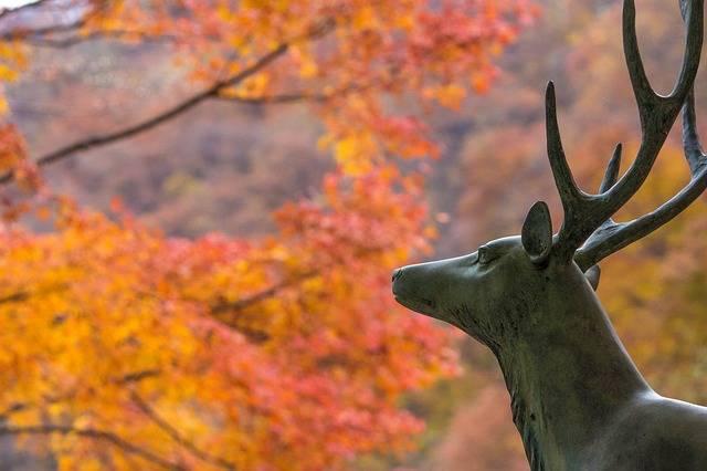 Deer Autumnal Leaves Maple - Free photo on Pixabay (315990)