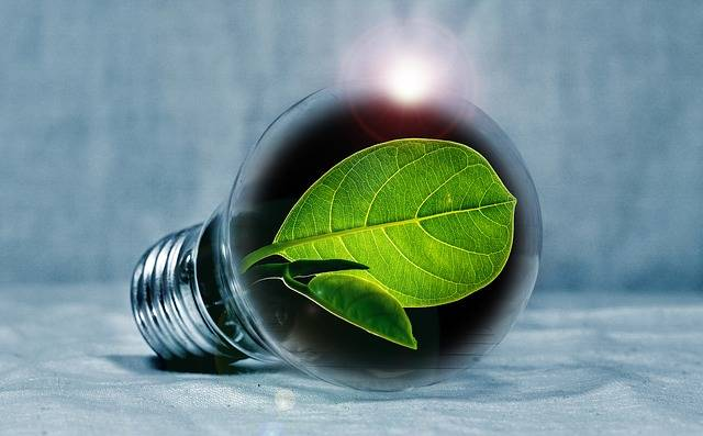Light Bulb Leaf Chlorophyll - Free photo on Pixabay (316348)