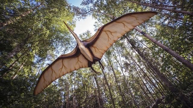 Pterosaur Reptile Extinct - Free photo on Pixabay (318911)