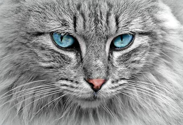 Cat Animal Portrait - Free photo on Pixabay (319518)
