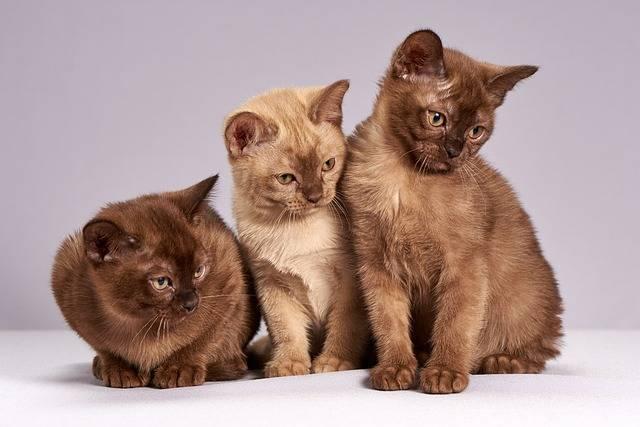 Cute Cats Kittens - Free photo on Pixabay (322004)
