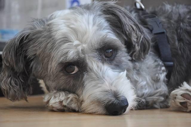 Dog Animal Cute - Free photo on Pixabay (322069)