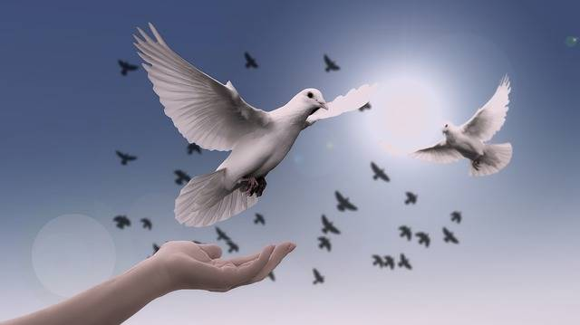Dove Hand Trust - Free photo on Pixabay (324931)