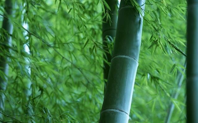 Bamboo Forest Wood - Free photo on Pixabay (325398)
