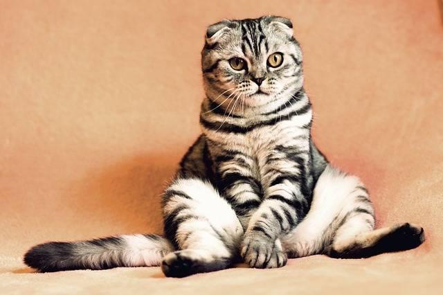 Cat Kitten Pets - Free photo on Pixabay (325590)