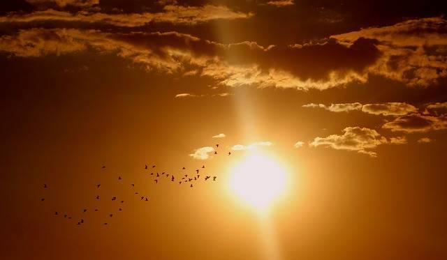 Sunset Birds Cloud - Free photo on Pixabay (325945)