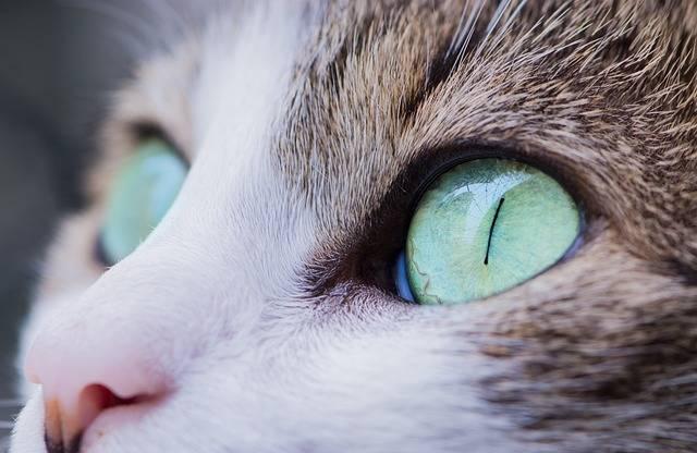 Animal Cat Close-Up - Free photo on Pixabay (326478)