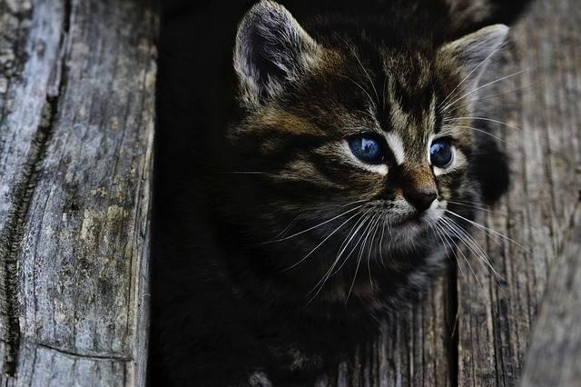 Cat Kitten Cute - Free photo on Pixabay (326539)