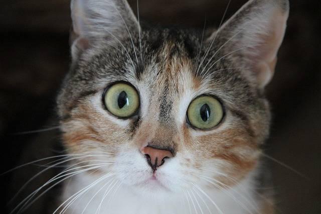 Cat House Kate Animal - Free photo on Pixabay (326986)