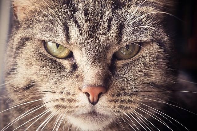 Cat Animal Pet Cat'S - Free photo on Pixabay (327452)