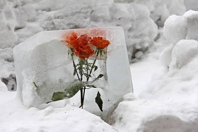 Flower Ice Deco - Free photo on Pixabay (328205)