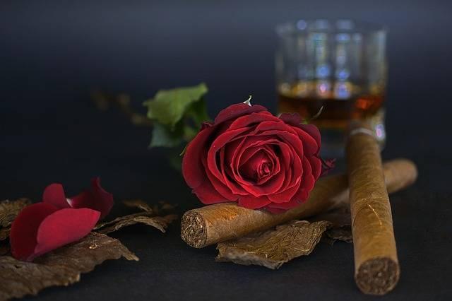 Rose Red Cigar Tobacco - Free photo on Pixabay (331528)