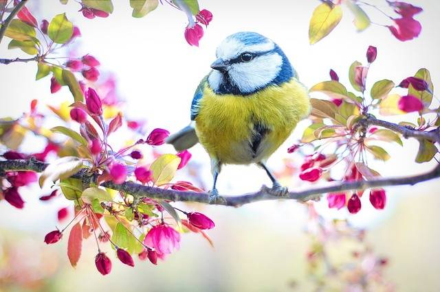 Spring Bird Tit - Free photo on Pixabay (332567)