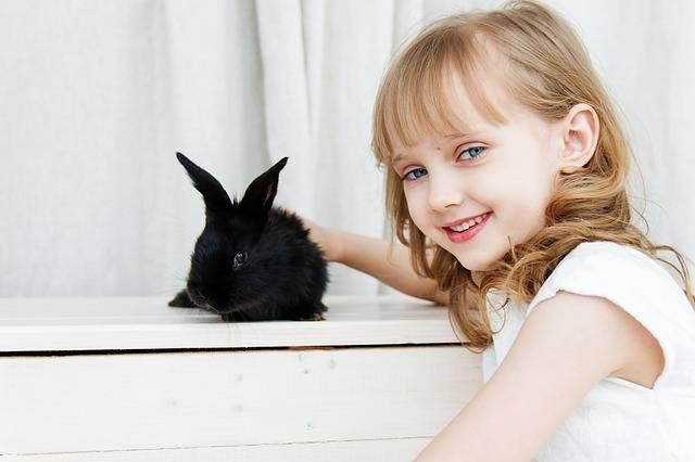 Rabbit Hare Baby - Free photo on Pixabay (332727)