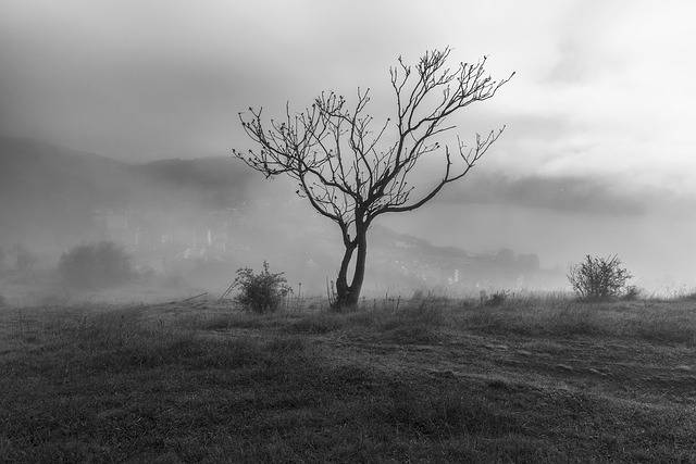 Tree Fog Kastoria - Free photo on Pixabay (336039)
