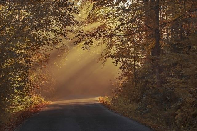 Autumnal Beautiful Color - Free photo on Pixabay (336773)