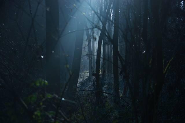 Dark Moody Scary - Free photo on Pixabay (338223)