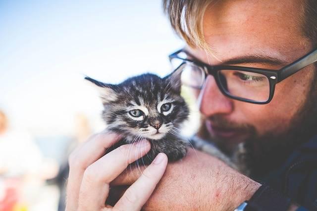 Adorable Animal Cat - Free photo on Pixabay (339383)