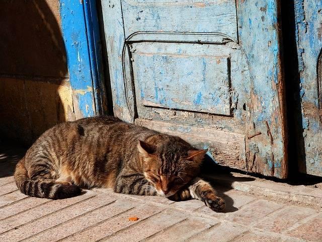 Cat Sleeping Outdoors - Free photo on Pixabay (340177)