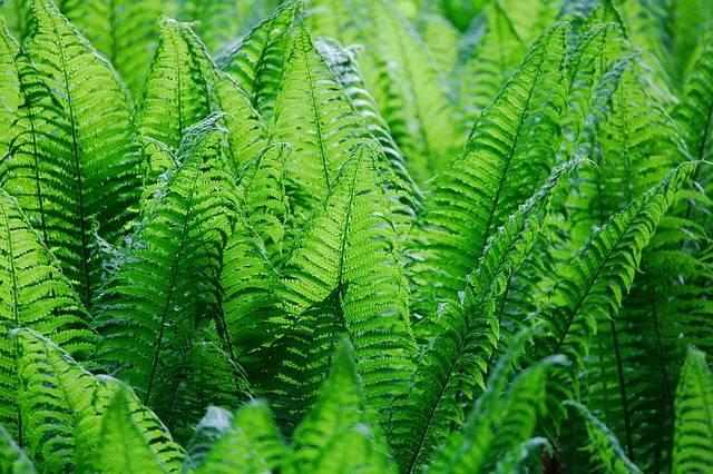 Leaf Plant Nature - Free photo on Pixabay (340345)