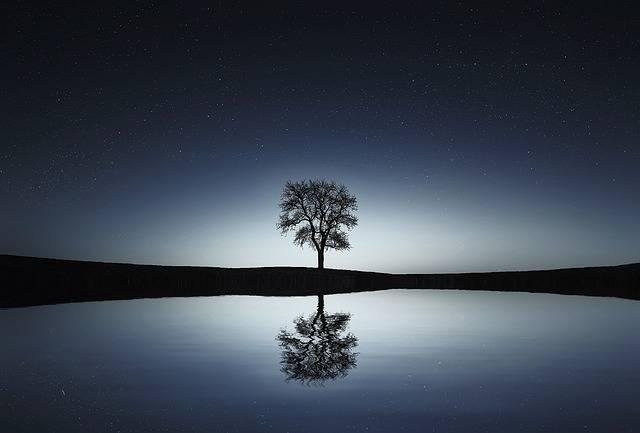 Tree Lake Reflection - Free photo on Pixabay (344518)